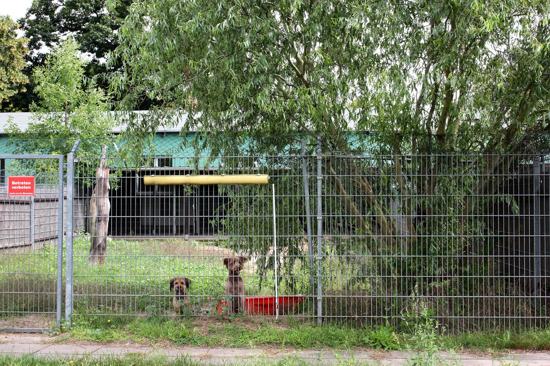 Hundehaus mit Freiläufen © aktion tier, Ursula Bauer